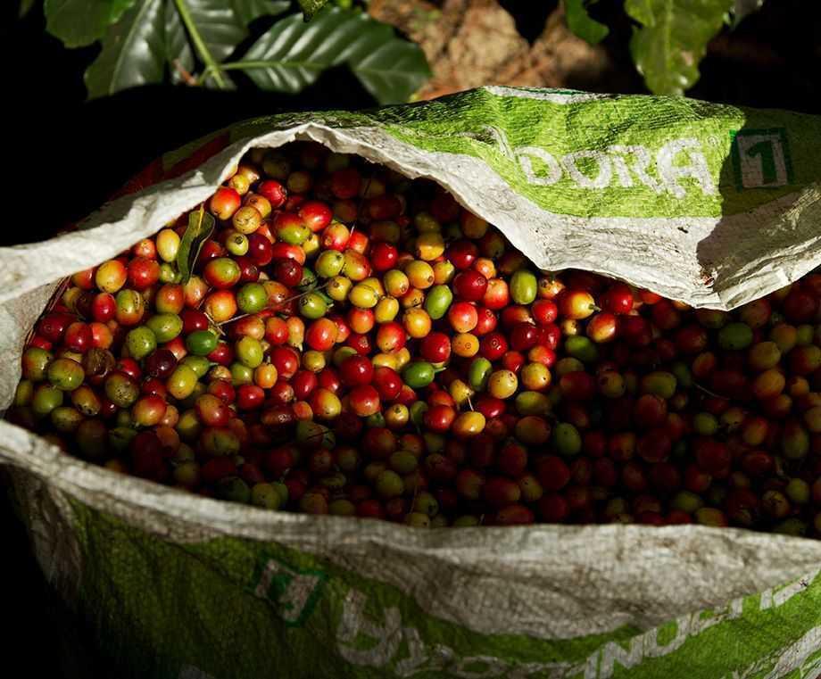 Bio Espresso & Bio Kaffee